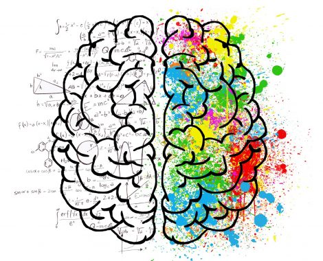 leer je brein kennen
